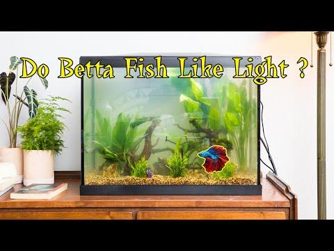 (Colorful Life )Do Betta Fish Like Light