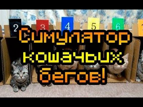Обзор Team Drift Cats [Симулятор кошачьих бегов!]