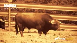 Toropasión - Reportaje Especial Liga del Corte Puro en Medina del Campo 2013