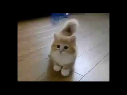 Lucunya Kucing Mengeong