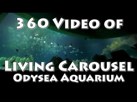 360 Video of the Living Carousel (OdySea Aquarium)