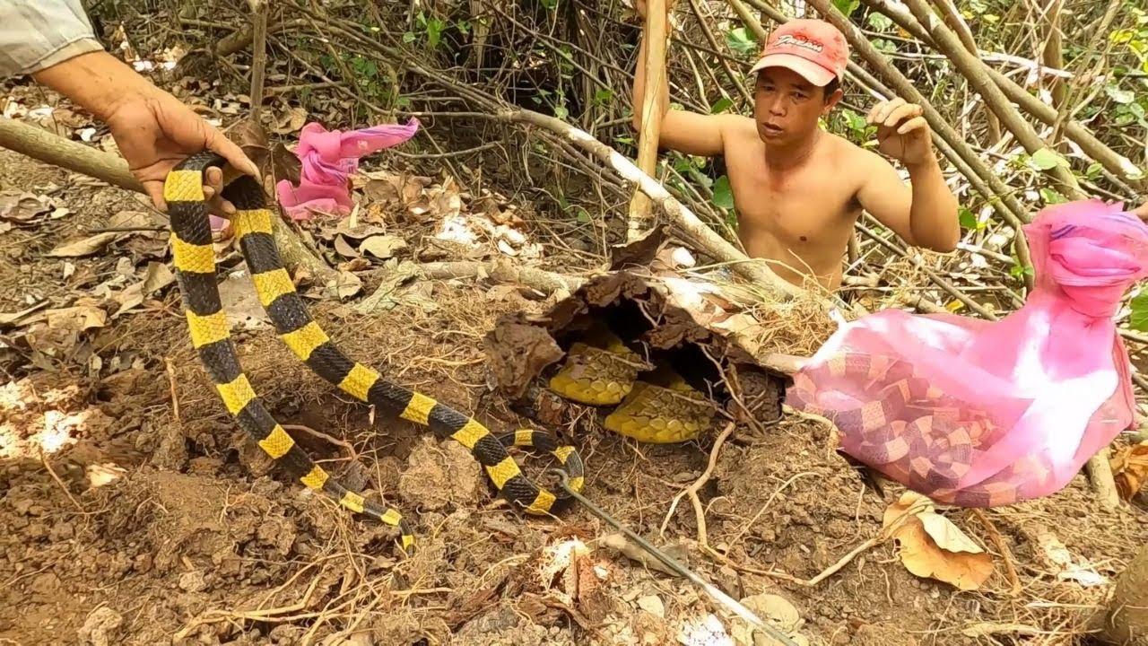 Săn Lùng Ổ Rắn Cực Độc Lớn Nhất Việt Nam| Săn Bắt TV