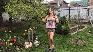 моя любима дача 6 мая 2019г. Новая сосна Негиши. Петуния. Цветут тюльпаны.Обзор любимого сада