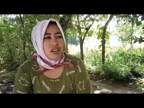 Gerimis Melanda Hati Cover Gadis Desa