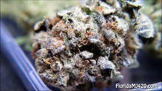 Layer Cake 22% THC Whole Flower from Curaleaf - Florida Medical Marijuana Strain Reviews