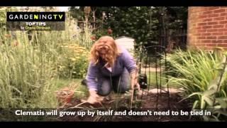 Charlie Dimmock summer planting clematis