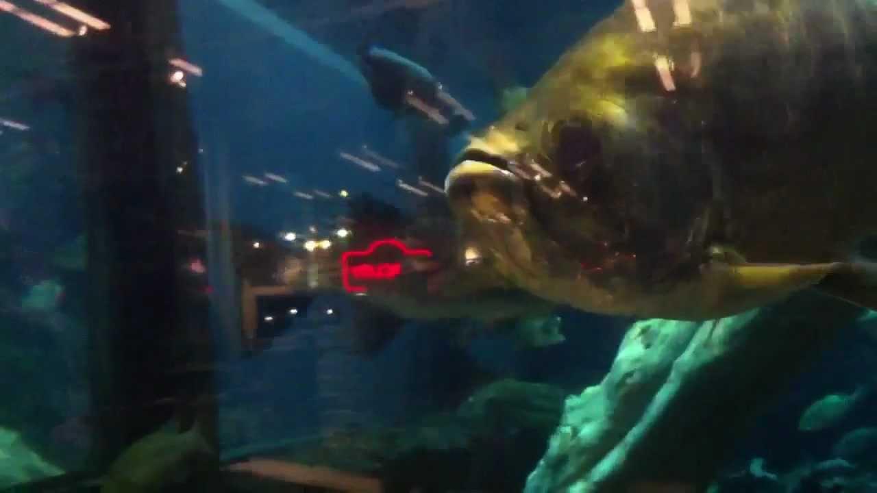 Freshwater aquarium fish orlando - Basspro Orlando Fish Tank