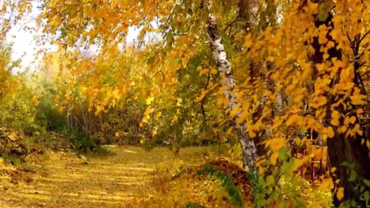 Осень в лесу - YouTube