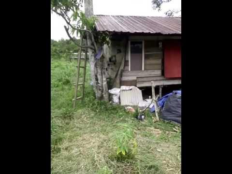 Ternak sapi lhoknga