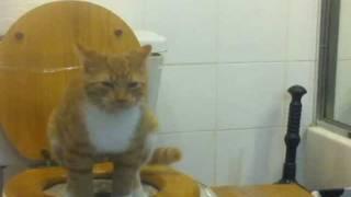 Toilet Training The Cat