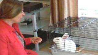 Why A Hutch Is Not Enough...inadequate Rabbit Accommodation