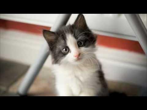gatti più belli di sempre - Avatar ( il mio gatto ) - YouTube