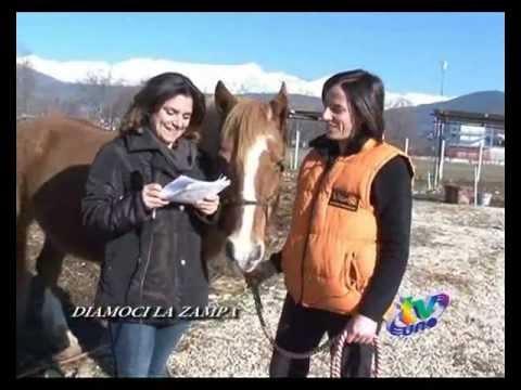 L'Equicentro a Tvuno (parte 1 di 3) – Ippoterapia, Pet Therapy ed Attività Assistite dagli Animali