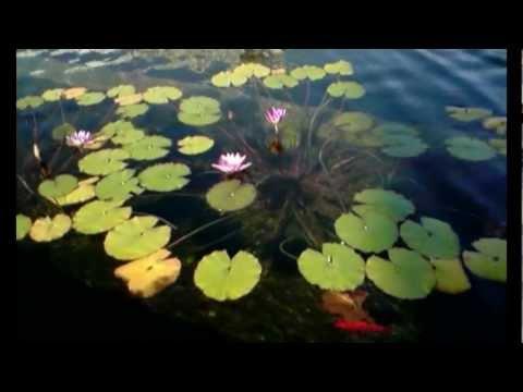 王菲 FAYE WONG 梦想 Dreams / The Cranberries -_-) פיי וונג: חלומות