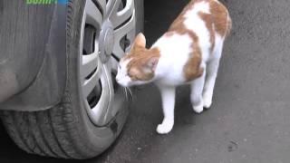 видео Примут ли закон о защите прав животных в России