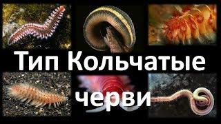 8. Кольчатые черви (7 класс) - биология, подготовка к ЕГЭ и ОГЭ 2018