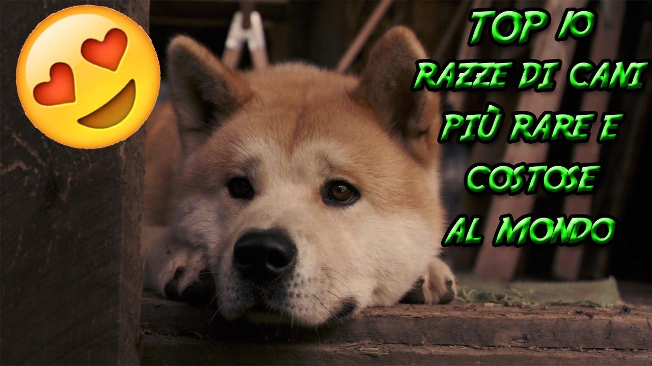 Top 10 razze di cani pi rare e costose al mondo top di for I cani youtube