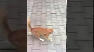 She Never Leaves Me - White Orange Cat Cute Says Love