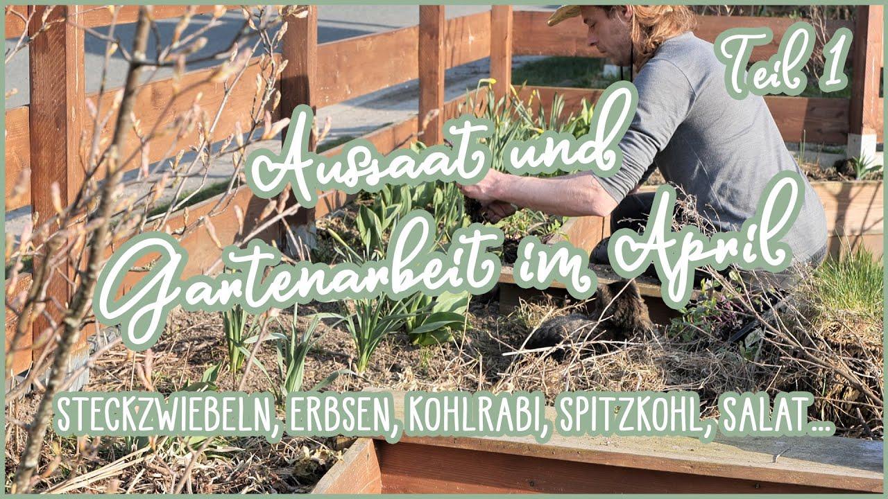 Freiland Aussaat und Gartenarbeit im April 🌞🌱 Steckzwiebeln, Erbsen, Kresse, Salat, Kohlrabi...