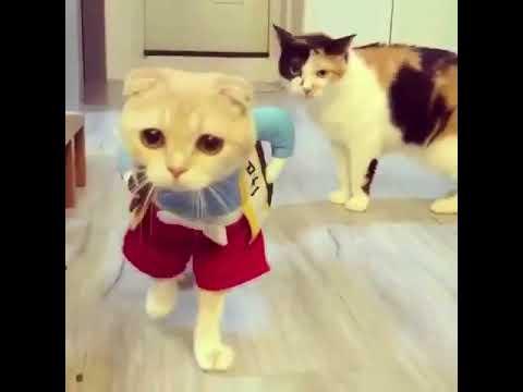 Hayatımda gördüğüm en tatlı kostümfjfj - www.sosyallog.com
