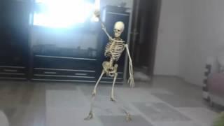 Iskelet Neden Dans Eder Ki