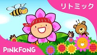 かわいいハチ | Baby Bumblebee 日本語 | リトミック | ピンクフォン童謡