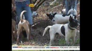 Anjing Pemburu - Sang Penantang (9/2)