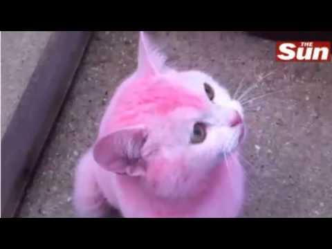 Pink Cat - Hair Dye