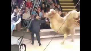 Accident in a Russian circus