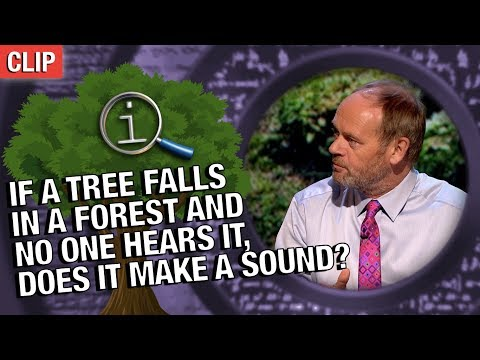 QI | If A Tree Falls In A Forest And No One Hears It, Does It Make A Sound?
