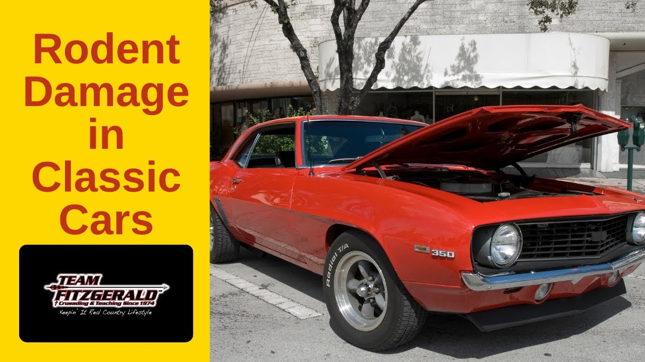 Protecting Classic Cars From Mice And Rat Damage Youtube Wiring Money Protection