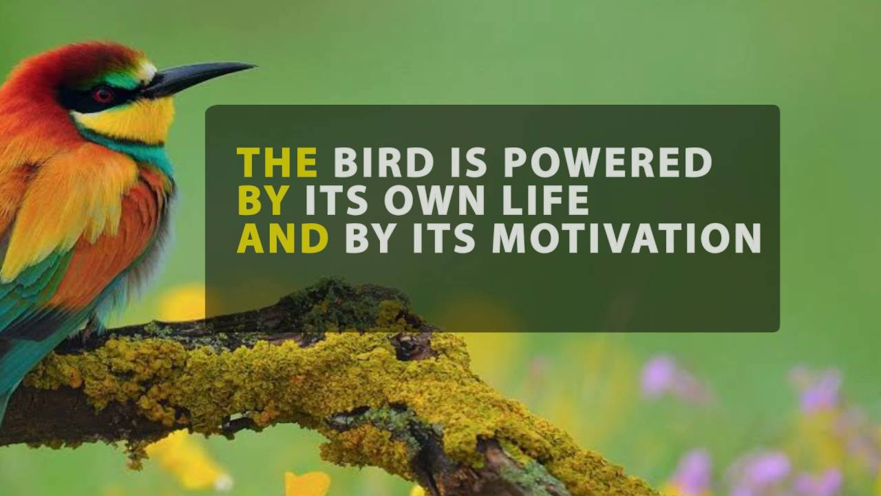 Inspirational Quotes Birds Youtube