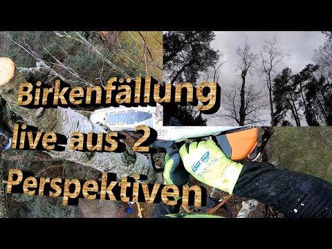 Birkenfällung Live Aus 2 Perspektiven In SKT Und Rigging