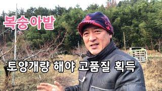 복숭아재배 토양개량 해야하는 이유와 방법