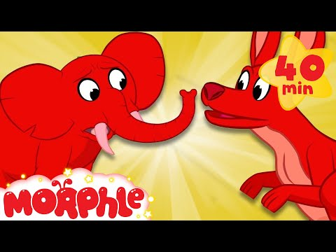 Learning Animals At The Zoo - My Magic Pet Morphle | Cartoons For Kids | Morphle TV | Kids Videos