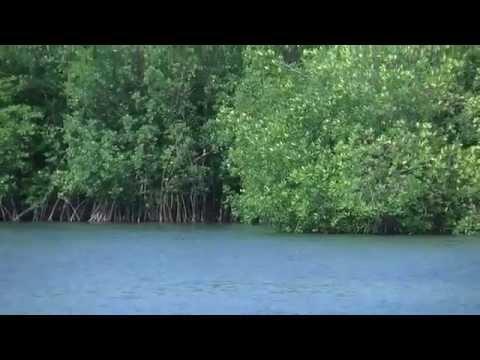 Un vistazo al canal de Chiquimulilla Santa Rosa