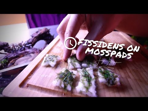 Fissidens Sushi