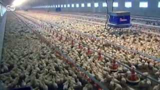 Producción industrial de carne, en la mira | Hecho en Alemania