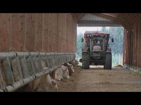 Élevage industriel vs. élevage bio : le paradoxe de l