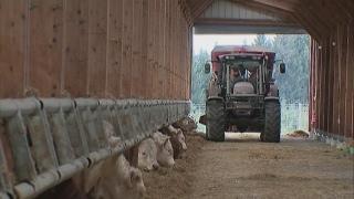 Élevage industriel vs. élevage bio : le paradoxe de l'agriculture en France