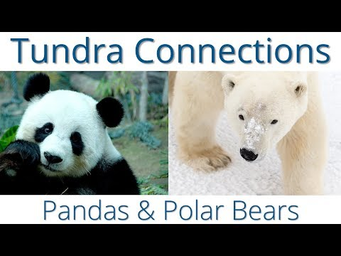 Pandas and Polar Bears