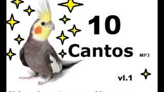 Assobio|Cantos|Treinamento|Calopsitas - 10 Cantos