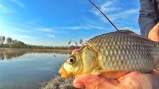 Рыбалка на КАРАСЯ. Жареный в СМЕТАНЕ на природе. ЖЕНЯ В ШОКЕ!