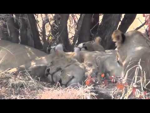 Self drive  Botswana (CKGR, Nxai pan, Chobe, Moremi...) and Zimbabwe (Hwange, ...).