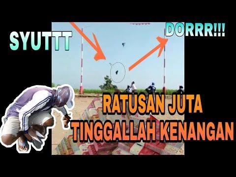 GILA !!! Merpati Kolong Super Nukik Rem Blong Langsung Mati Ditempat #HOBIKU