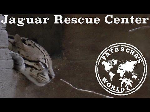 Jaguar Rescue Center - die beste Tierklinik an Costa Rica's Karibikküste