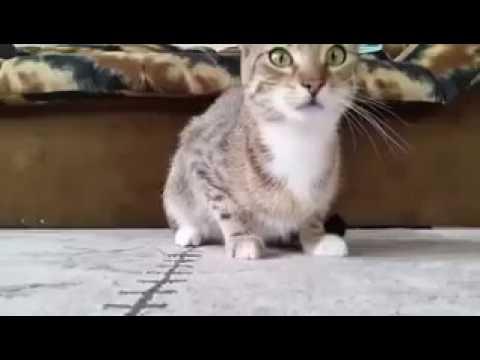 قطة مندمجة مع فلم رعب مضحك Youtube