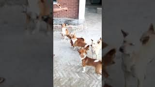 কুকুর#সার্কাস#Dog circus# Dog breakfast time# intelligent Dogs#
