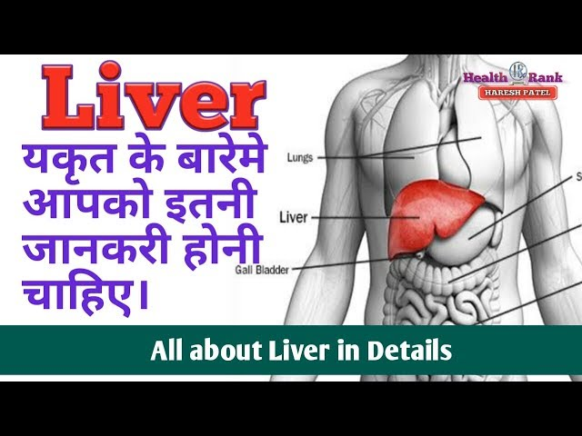 Liver care tips in Hindi    All about Liver function and causes of Damage    Health Rank
