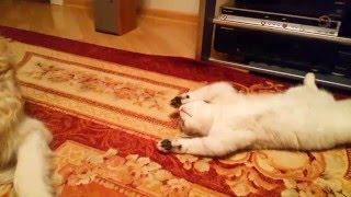 Домашние питомцы. Кошка и собака